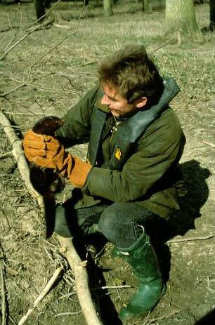 Rob in the field getting to know an American mink