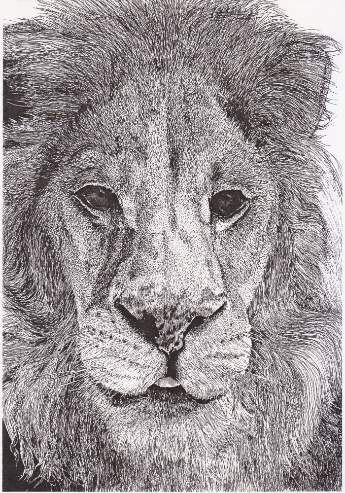 Lion by Maria Goncalves