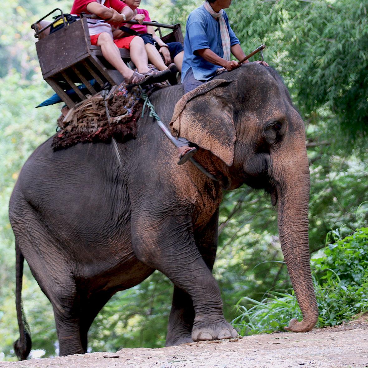 tourists riding an elephant