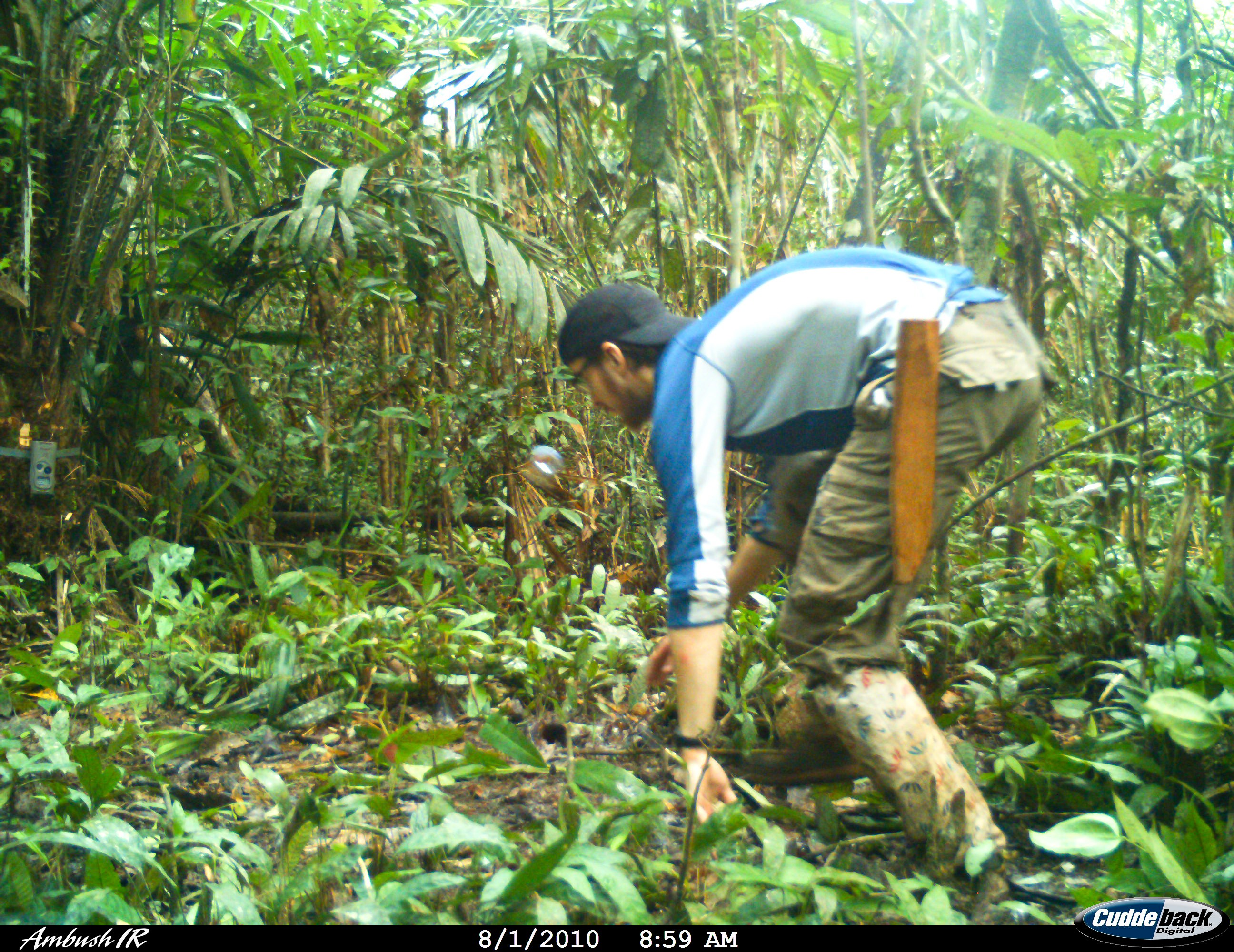 Ewan Macdonald setting camera traps for clouded leopards in Borneo. Researchers commonly move in front of the camera traps to mimic animals and ensure that the traps are set correctly.